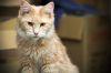 http://www.fichen.de/art/cats/thumbs/002.jpg