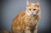 http://www.fichen.de/art/cats/thumbs/003.jpg